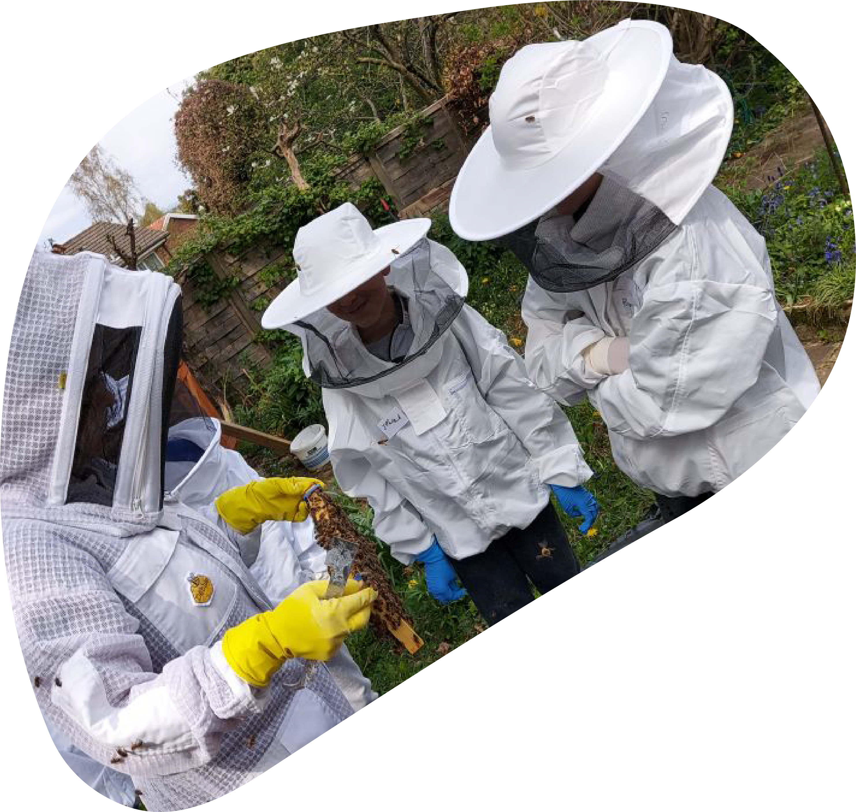 SHOWING BEES