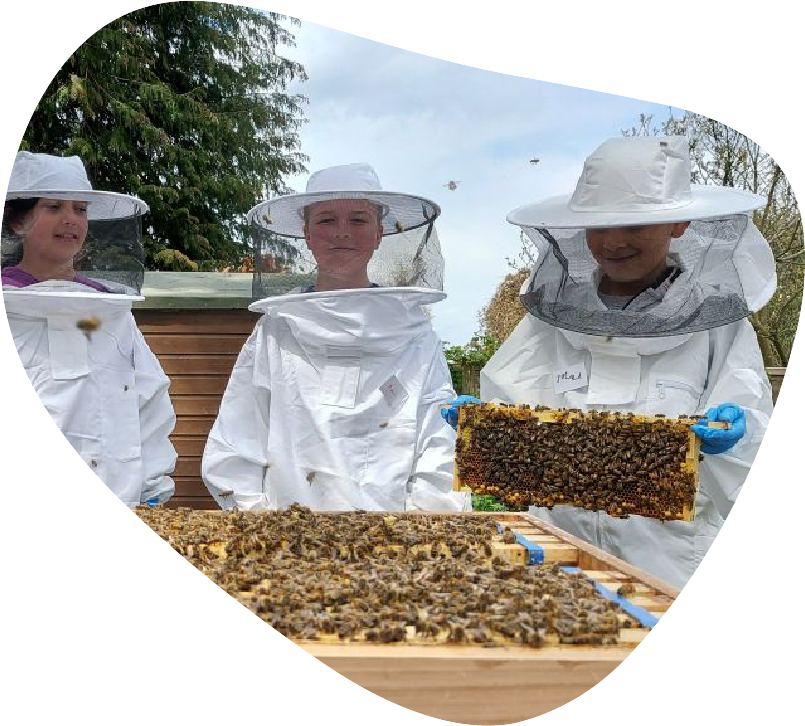 kids bees